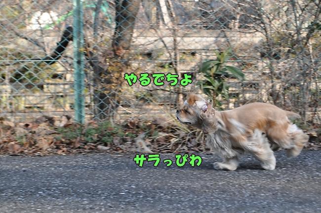 b0067012_22185196.jpg