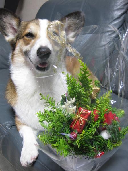 クリスマスに間に合った~♪_f0155118_6381929.jpg