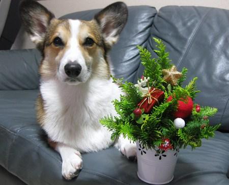 クリスマスに間に合った~♪_f0155118_6392892.jpg