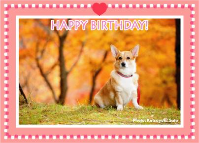 ネスタちゃん、お誕生日おめでとう♪_d0102523_018829.jpg
