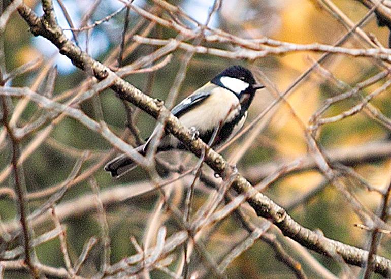 12月の長田谷津(千葉県市川市)~可憐な小鳥たち~_c0223825_23493482.jpg