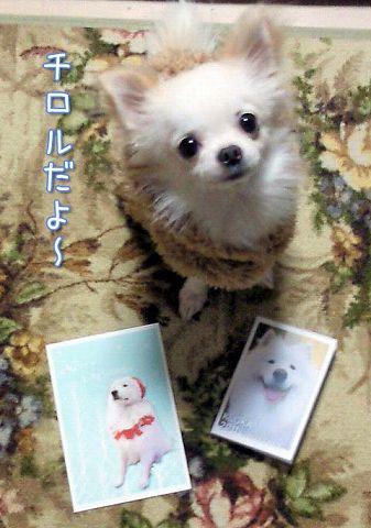 クローカ仕事納め_c0062832_18112034.jpg