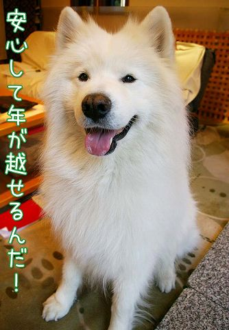 クローカ仕事納め_c0062832_18123189.jpg