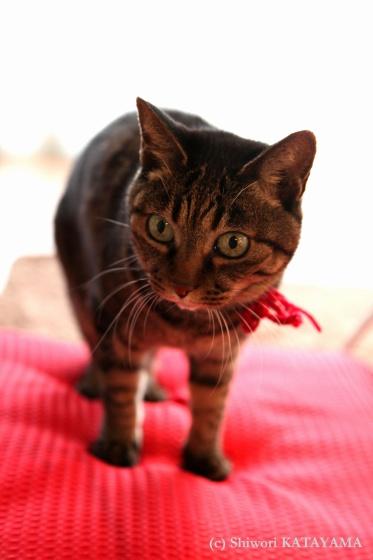 Cats&Dog_d0170980_0504474.jpg