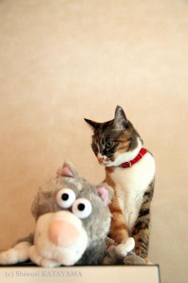 Cats&Dog_d0170980_0513413.jpg