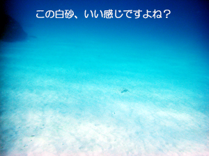f0144385_8111175.jpg