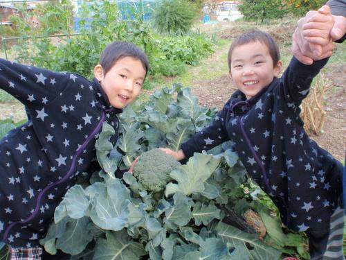 ブロッコリ-収穫!!_b0201492_15274436.jpg