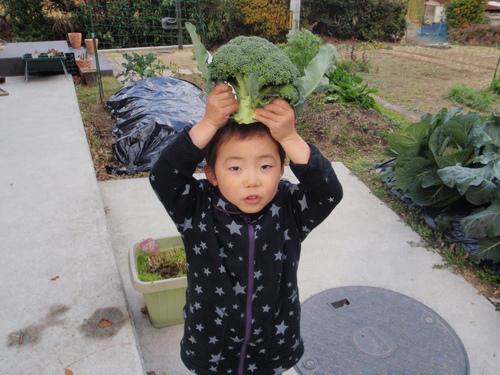 ブロッコリ-収穫!!_b0201492_15292431.jpg