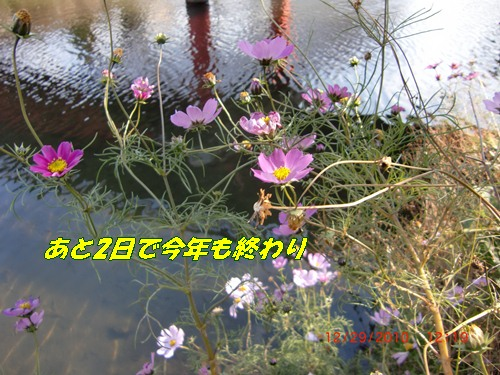 b0205192_14484197.jpg