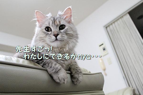 c0211109_5478100.jpg