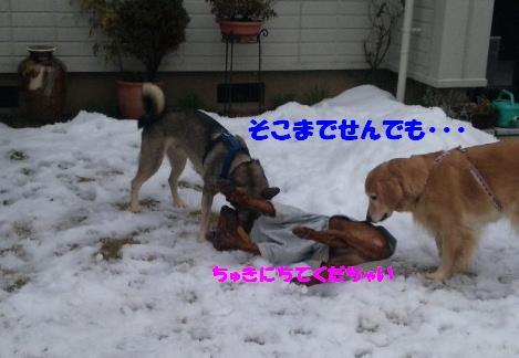 お散歩♪_b0207320_223998.jpg