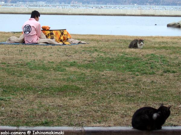 猫島の日常_f0164826_23375392.jpg