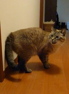 猫のお友だち ギンくん編。_a0143140_2318368.jpg