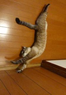 猫のお友だち ギンくん編。_a0143140_2319118.jpg