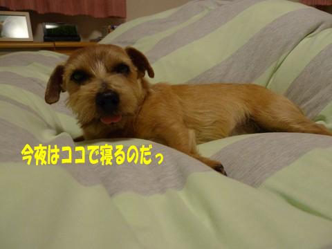 d0043478_1122185.jpg