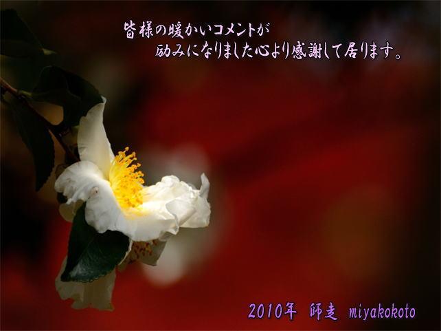 f0108478_154643100.jpg