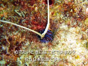 f0144385_091465.jpg