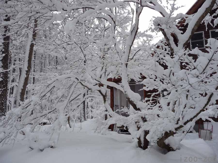 雪、少ないなぁ。。。_c0223095_2159391.jpg