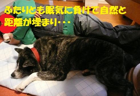 f0121712_7345029.jpg