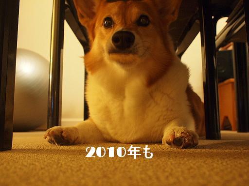 2010年 〆のご挨拶_e0147716_22541176.jpg