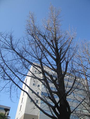 b0028845_2011127.jpg
