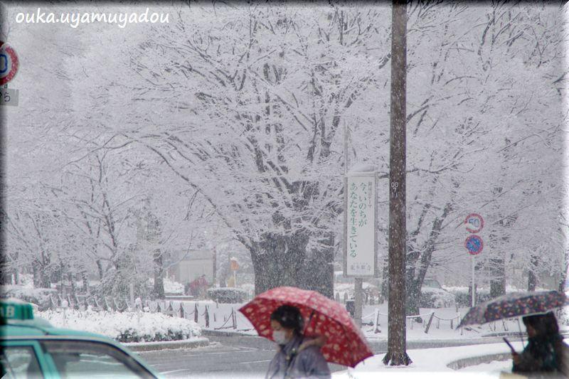 冬の京都・雪の大晦日_a0157263_2235059.jpg