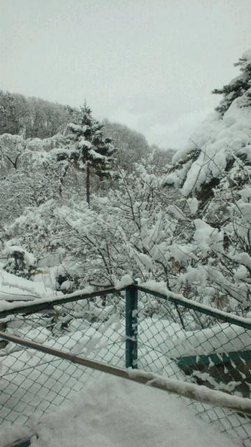 盛岡は大雪です_a0159393_914456.jpg