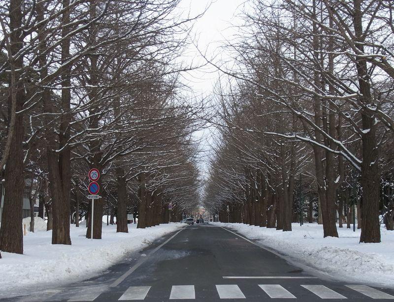 2011年1月1日の北大構内_c0025115_23332395.jpg