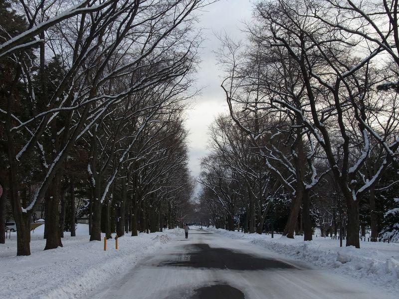 2011年1月1日の北大構内_c0025115_23332593.jpg