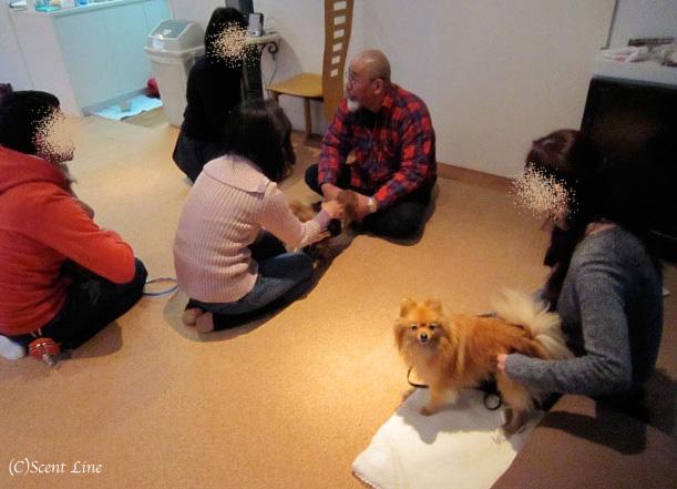 愛犬の為の整体教室のお知らせ&レポート_c0099133_18451232.jpg