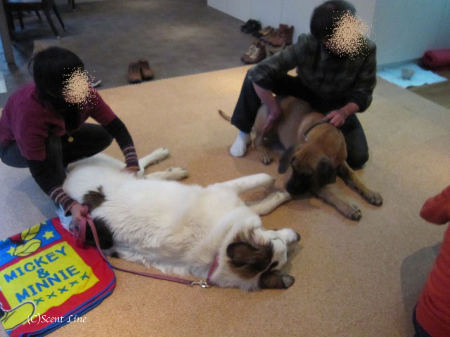 愛犬の為の整体教室のお知らせ&レポート_c0099133_18452835.jpg