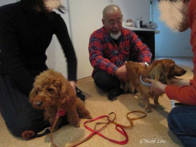 愛犬の為の整体教室のお知らせ&レポート_c0099133_18454561.jpg
