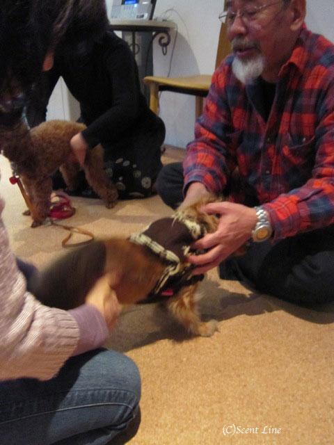 愛犬の為の整体教室のお知らせ&レポート_c0099133_18455679.jpg