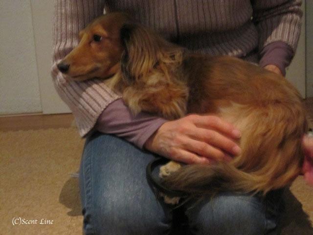 愛犬の為の整体教室のお知らせ&レポート_c0099133_1847219.jpg