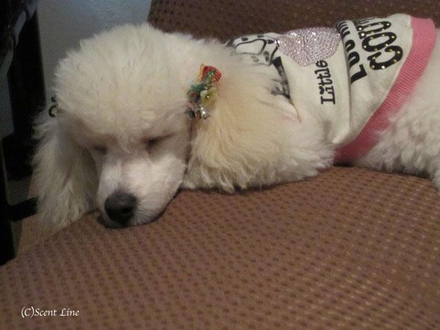 愛犬の為の整体教室のお知らせ&レポート_c0099133_18472986.jpg