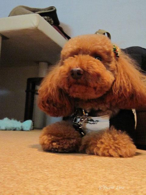 愛犬の為の整体教室のお知らせ&レポート_c0099133_18474527.jpg