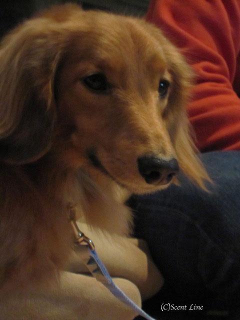 愛犬の為の整体教室のお知らせ&レポート_c0099133_18475287.jpg