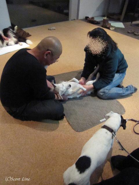 愛犬の為の整体教室のお知らせ&レポート_c0099133_18481167.jpg