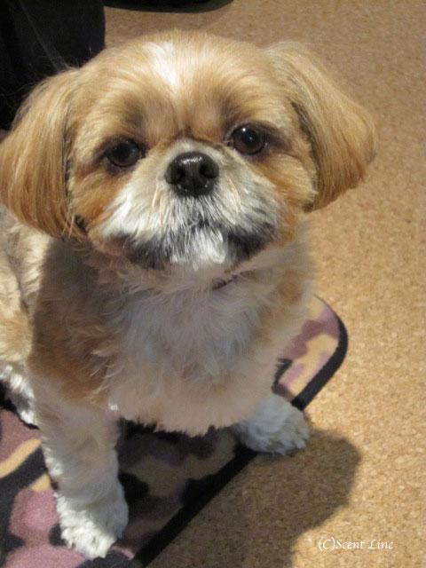 愛犬の為の整体教室のお知らせ&レポート_c0099133_18482729.jpg