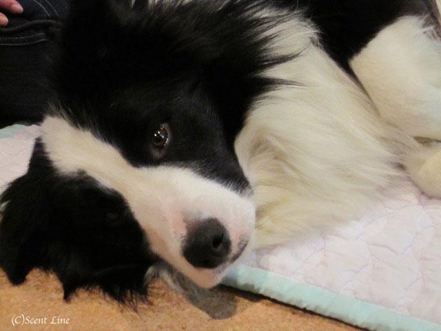 愛犬の為の整体教室のお知らせ&レポート_c0099133_18483656.jpg