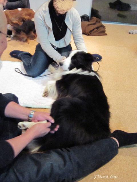 愛犬の為の整体教室のお知らせ&レポート_c0099133_18485988.jpg