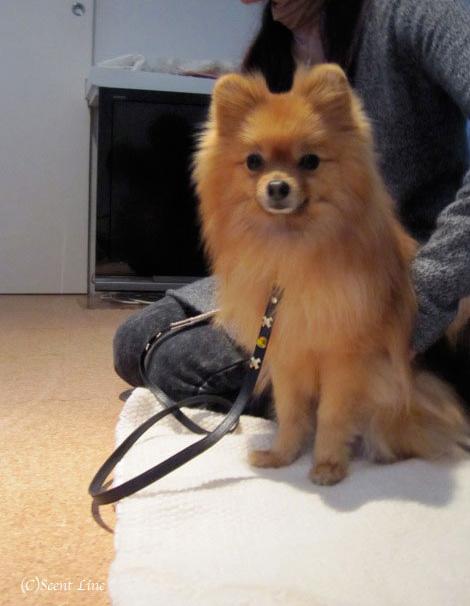 愛犬の為の整体教室のお知らせ&レポート_c0099133_18493412.jpg