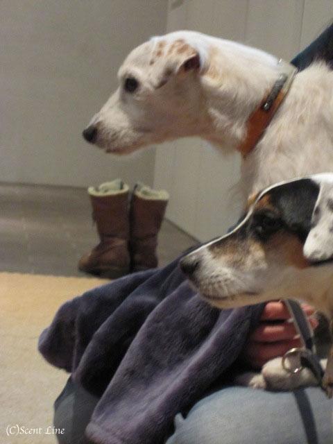 愛犬の為の整体教室のお知らせ&レポート_c0099133_18494877.jpg