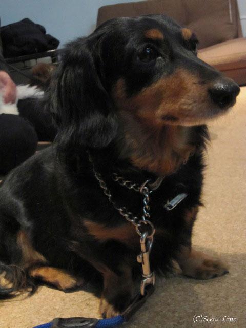 愛犬の為の整体教室のお知らせ&レポート_c0099133_1850845.jpg