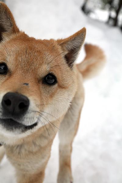 雪の中、チー太郎_b0123467_14324897.jpg
