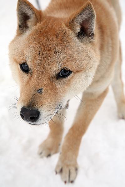 雪の中、チー太郎_b0123467_1435157.jpg