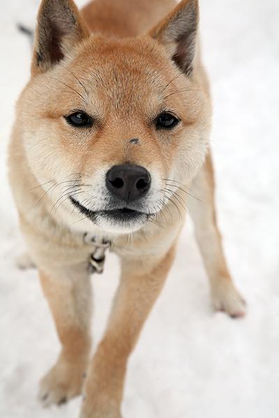 雪の中、チー太郎_b0123467_14493690.jpg