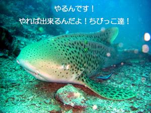 f0144385_9561866.jpg