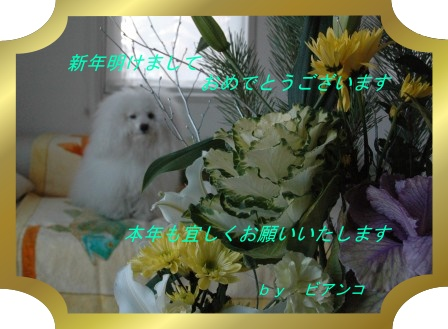 d0118050_1635272.jpg
