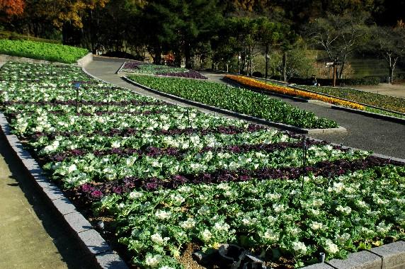 和歌山県植物公園緑花センター _b0093754_2345234.jpg